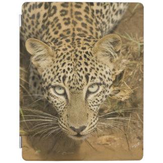 ヒョウ、aから飲むヒョウ属のpardus iPadスマートカバー