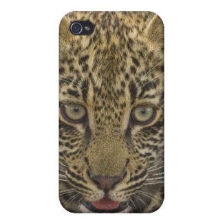 ヒョウ、Krugerのすばらしい国民2の閉めて下さい iPhone 4 ケース