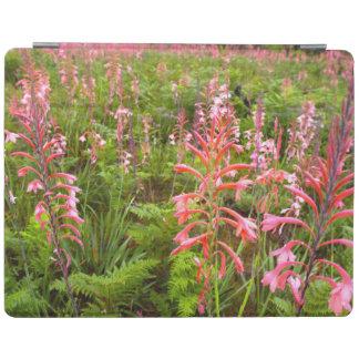 ビューグルユリ(Watsonia)の花、東ケープ州 iPadスマートカバー