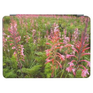 ビューグルユリ(Watsonia)の花、東ケープ州 iPad Air カバー