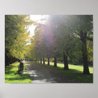 ビュート公園-秋の木 ポスター