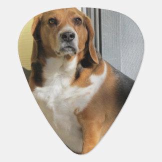 ビーグル犬のギターピック ギターピック