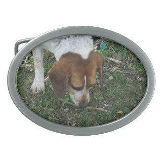 ビーグル犬のベルトの留め金 卵形バックル