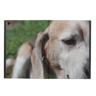 ビーグル犬のポートレート