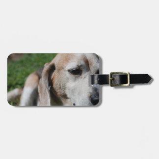 ビーグル犬のポートレート ラゲッジタグ