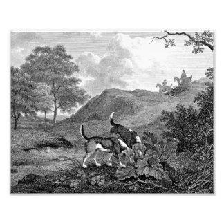 ビーグル犬の白黒ヴィンテージの芸術 フォトプリント