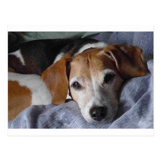 ビーグル犬ハリアー犬 ポストカード