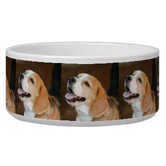 ビーグル犬犬