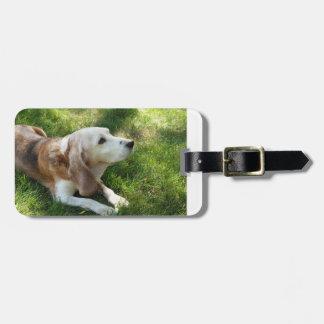 ビーグル犬laying.png ラゲッジタグ