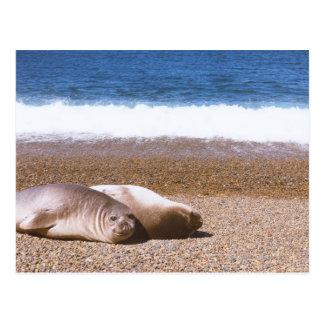 ビーチで休んでいるアシカ ポストカード