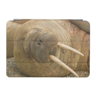 ビーチで休んでいるセイウチの大きい雄牛 iPad MINIカバー