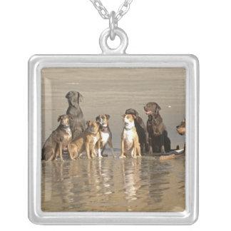 ビーチに坐っている犬 シルバープレートネックレス