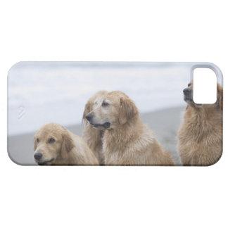 ビーチに坐っている複数のゴールデン・リトリーバー iPhone 5 Case-Mate ケース