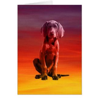 ビーチに坐っているWeimaraner犬 カード