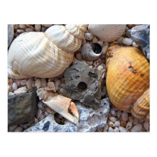 ビーチに海の貝 ポストカード