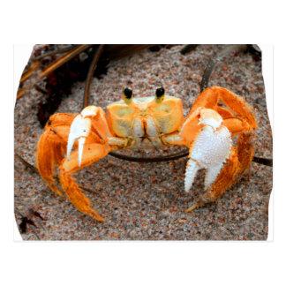 ビーチのシオマネキは砂のオレンジをcolorized ポストカード