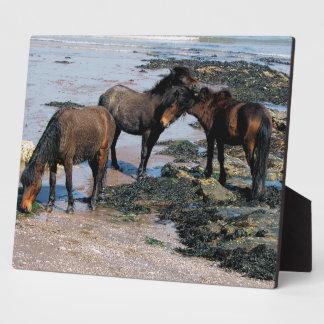 ビーチのデボン南3 Dartmoorの子馬 フォトプラーク