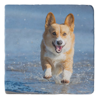 ビーチのペンブロークのウェルシュコーギー犬のランニング トリベット