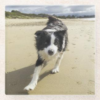 ビーチのボーダーコリー犬のランニング ガラスコースター