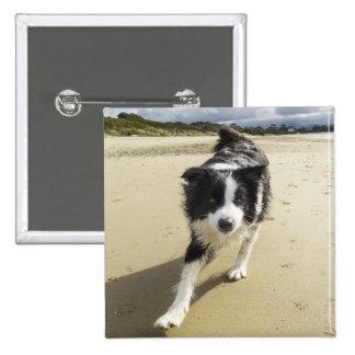 ビーチのボーダーコリー犬のランニング 5.1CM 正方形バッジ