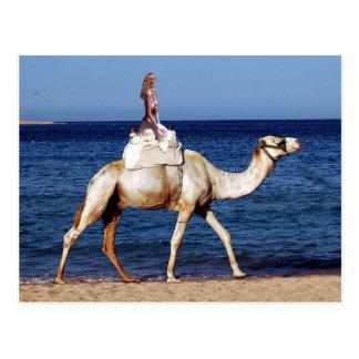 ビーチのラクダの乗馬 ポストカード