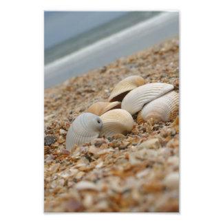 ビーチの写真の想像的なイメージの海の貝 フォトプリント