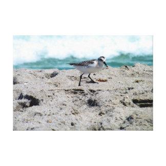 ビーチの小さい鳥 キャンバスプリント