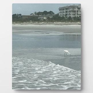 ビーチの小さい鷲 フォトプラーク