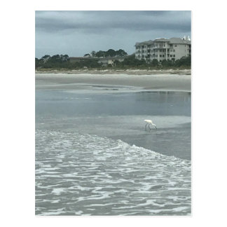 ビーチの小さい鷲 ポストカード