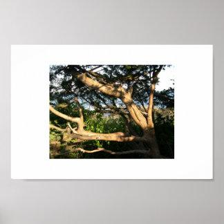 ビーチの木、Ogunquit、メイン ポスター