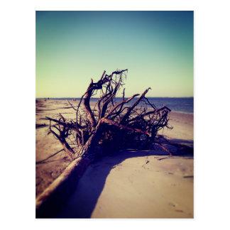 ビーチの根こそぎにされた木 ポストカード
