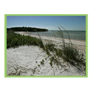 ビーチの海岸のラインおよび植物 ポストカード
