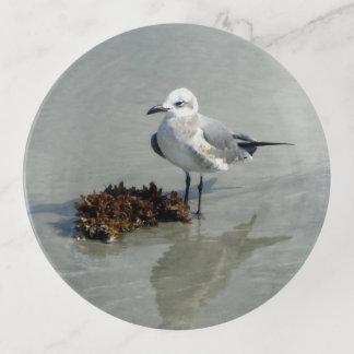 ビーチの海藻を持つカモメ トリンケットトレー