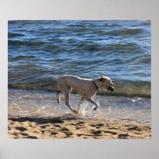 ビーチの犬のランニング ポスター