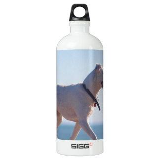 ビーチの犬 ウォーターボトル