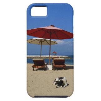 ビーチの犬 iPhone SE/5/5s ケース
