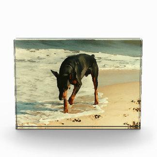 ビーチの絵画のイメージのドーベルマン犬 表彰盾