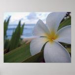ビーチの花 ポスター
