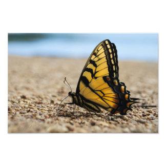 ビーチの蝶 フォトプリント