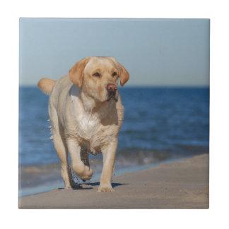 ビーチの黄色いラブラドル・レトリーバー犬 タイル