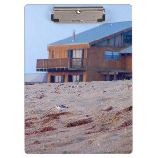 ビーチハウスの砂のシギの鳥フロリダ クリップボード