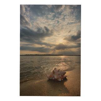 ビーチ|セントオーガスティン、Flのコンシュの貝 ウッドウォールアート