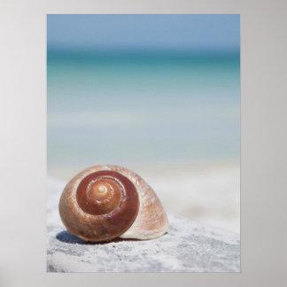 ビーチ セント・ピーターズバーグ、Flの貝殻 ポスター
