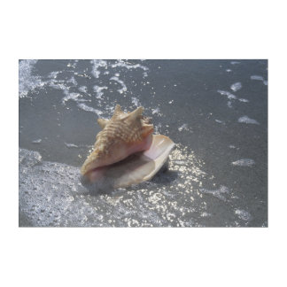 ビーチ| Sanibelの島、フロリダの貝殻 アクリルウォールアート