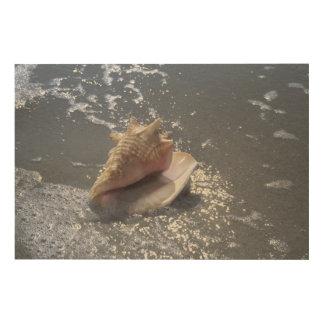 ビーチ| Sanibelの島、フロリダの貝殻 ウッドウォールアート