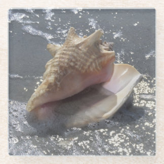 ビーチ| Sanibelの島、フロリダの貝殻 ガラスコースター