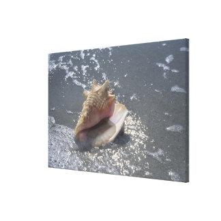 ビーチ| Sanibelの島、フロリダの貝殻 キャンバスプリント