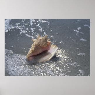 ビーチ| Sanibelの島、フロリダの貝殻 ポスター
