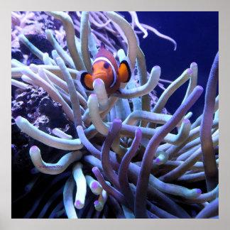 ピエロの魚のアネモネポスター ポスター