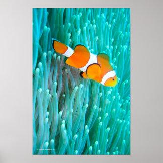 ピエロの魚 ポスター